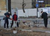 В центре Саратова зелени в сто раз меньше требований гигиенических норм РФ