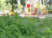 «Володинский» двор в Саратове зарос коноплей