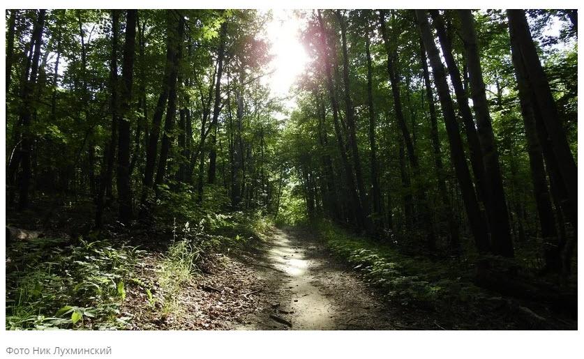 Саратовские депутаты поспорили о возможности посадить леса в пустынях Алгая