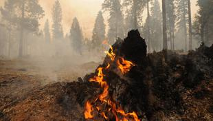 Валерий Рашкин предложил Сечину, Якунину и Чубайсу отчислить месячную зарплату для помощи пострадавшим при пожарах в Хакасии