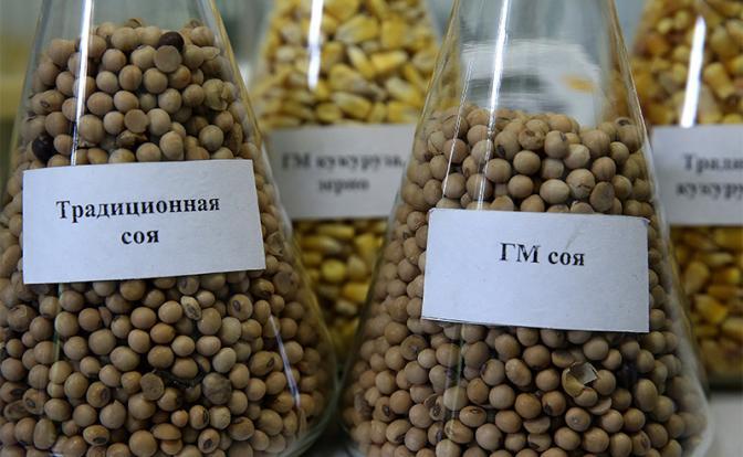 Мишустин и Патрушев-младший бросили ГМО-вызов Путину